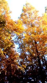 11月21日 黄色木