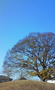 12月8日 大きな木