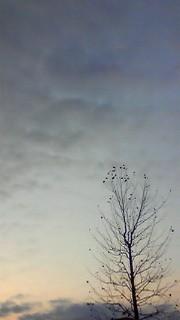 12月8日 ふゆざれの木
