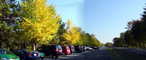 なにげにこの辺が紅葉が一番綺麗だったような(笑)。