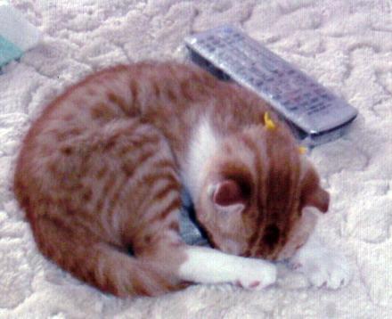 子猫時代のつくつく