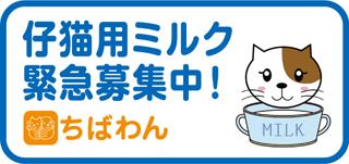 子猫用ミルク募集