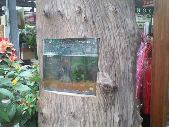 古木水槽台02