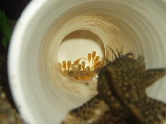第5弾稚魚孵化