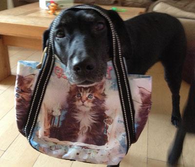 こんなバッグよ
