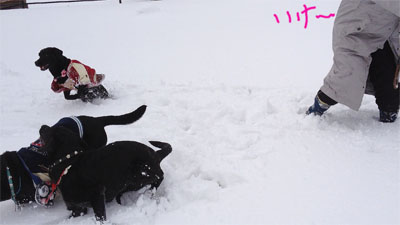 雪の中のディスク♩