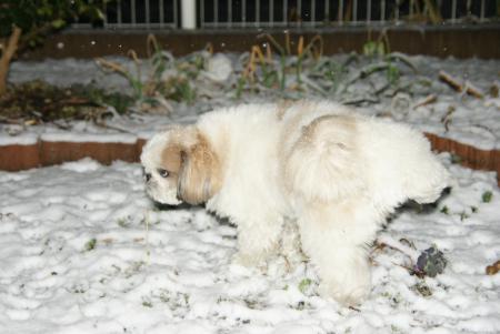 雪と獅子丸 オシッコ1