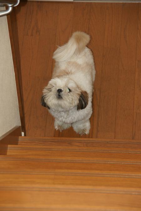 階段下で呼ぶ獅子丸