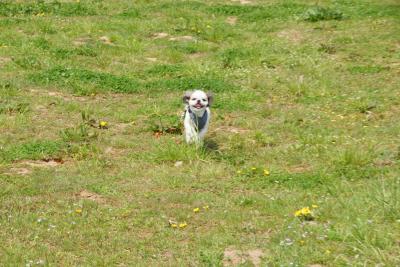 多賀城跡で走る獅子丸1