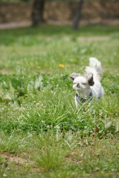 多賀城跡で走る獅子丸4