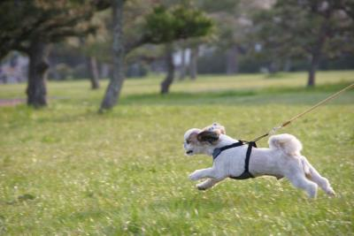 走る獅子丸 松島