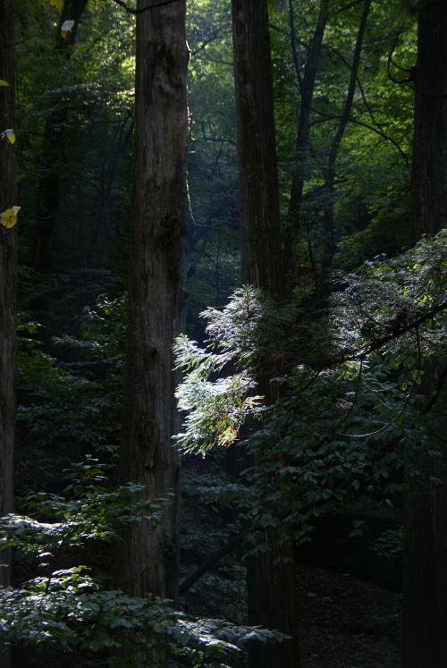 瀧尾神社1