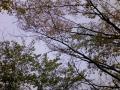 2009_04_24 賣太神社 弘川寺 30
