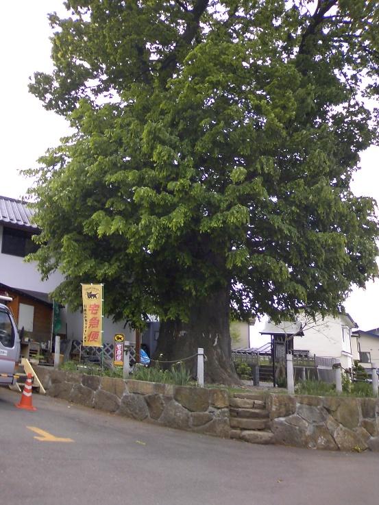 Suwa_UM_18.jpg