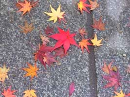 autumn leaves3