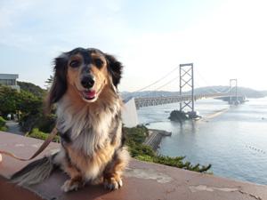 大鳴門橋をバックにP1040873