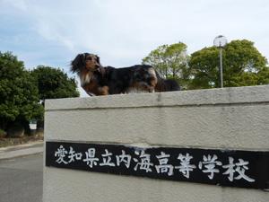 内海高校P1050014
