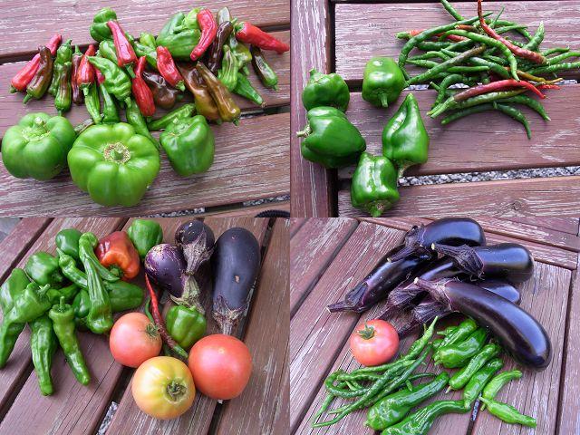 イマイチの収穫・・