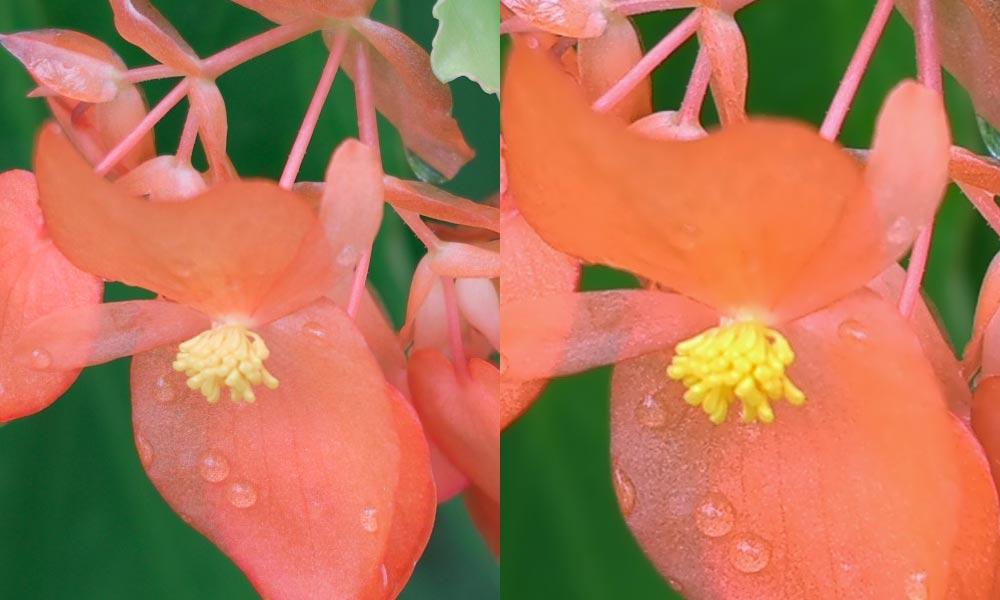 赤い花比較