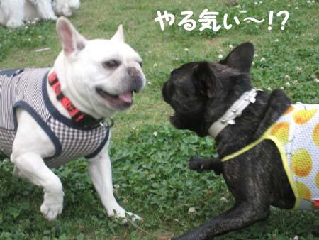 unicoちゃん VS 葵 !!