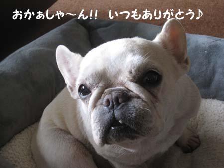 IMG_3114.jpg