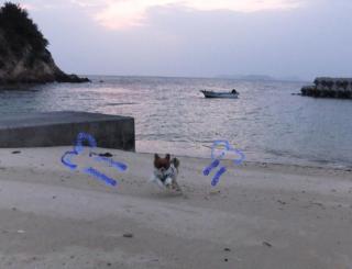 砂浜で走る