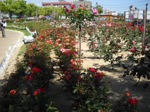 バラ公園1
