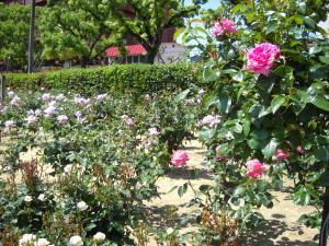 バラ公園3