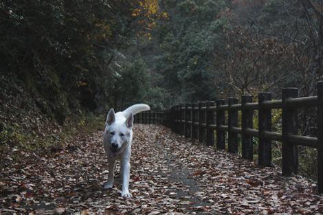 山散歩です