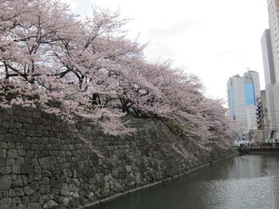 1004駿府公園