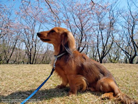 花見をする犬