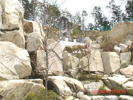 正修寺の桜