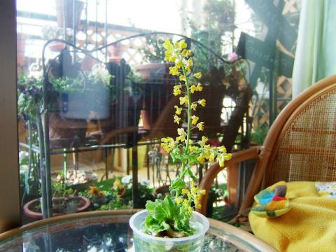 白菜の花100225F710 011