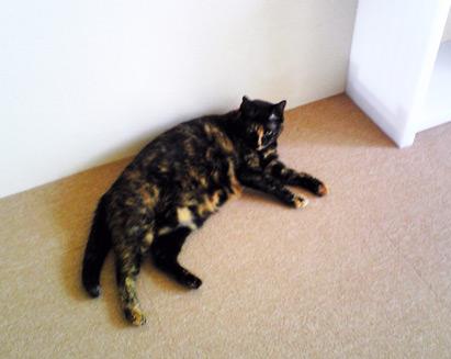 猫とタイルカーペット