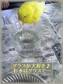 お水はグラスで