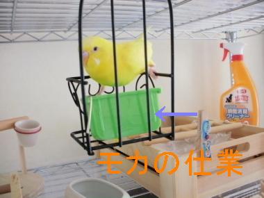 ぽぴ 004