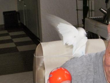 ルナの羽根はとってもきれい 047