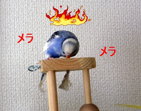 燃えているマリン