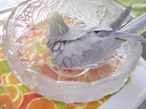 モカ入浴4