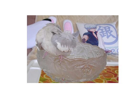 モカ入浴5