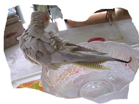 モカ入浴7