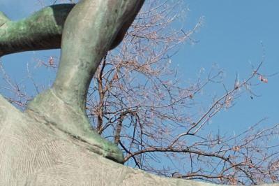 細かい木の枝を等倍でこれだけ解像しています