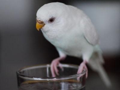 こうして見れば普通の鳥