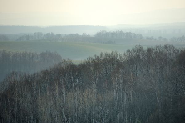 早朝のパッチワークの丘
