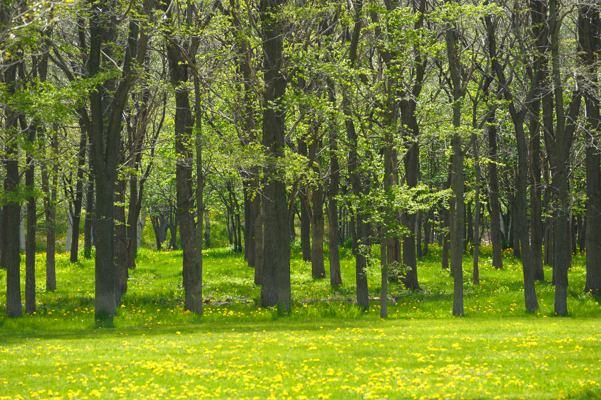 森と林の違いってなんでしたっけ