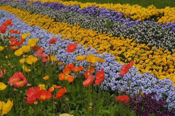 テレビ塔下の花畑、バラさなきゃ富良野でも通せる?