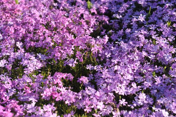 近づくとこんな花、1センチくらいの花