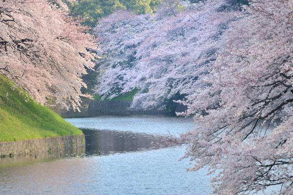 日本の花だなあ
