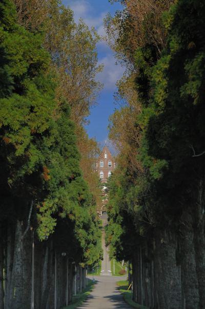 こんな感じ。片側の木が真っ黒になるのは防げました。今度は冬に来たいです