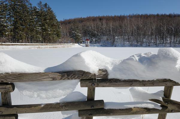 凍った池の感じを見てみたかった
